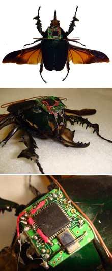 Źródło: http://k21st.files.wordpress.com/2009/02/cyborg_x220.jpg, www.przegladdziennikarski.pl